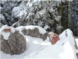 Javorca(Golte)zimski Boskovec