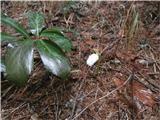 Javorca(Golte)pod Kebrom pa pomlad