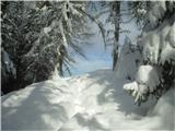 Goli vrh  1787 mnmvhod na Jenkovo planino