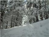 Goli vrh  1787 mnmzmeraj več snega in naklona :)