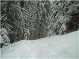 Goli vrh  1787 mnmnazaj v gozd