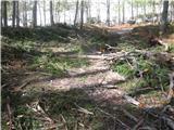 ZelenicaGor grem na levi strani mosta po gozdni cesti prek gozdička. Žal je pot kar   krepko nastlana po sečnji.