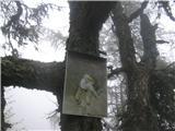 VajnežNazaj grede na nekem drevesu v gozdu opazim sliko.
