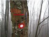 Slovenske planine v vseh letnih časihZačetek poti je označen, žal je tablo požrlo drevo.
