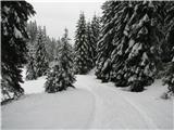 Slovenske planine v vseh letnih časihCesta -po tej sem šel.