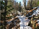 Slovenske planine v vseh letnih časihPri lesi.