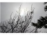 Polhograjska Grmadatrudilo se je sonce danes, na koncu mu je za nekaj minut le uspelo
