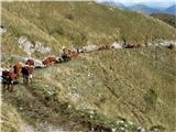 Kobariški StolČreda odhaja v dolino