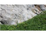 Kalška goraCvetje je  povsod ob poti