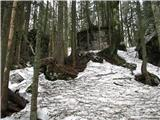 Slovenske planine v vseh letnih časihV gozdu moramo paziti, da preveč ne zaidemo.