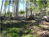 Slovenske planine v vseh letnih časihNato pa po gozdu.