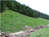 Slovenske planine v vseh letnih časihPaše bo dovolj.