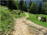 Slovenske planine v vseh letnih časihCesta na planino.
