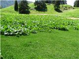 Slovenske planine v vseh letnih časihTa kislica pa dela sive lase pastirjem.