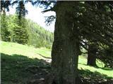 Slovenske planine v vseh letnih časihTam čez pa še pašnik konča .