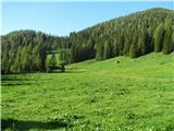 Slovenske planine v vseh letnih časihPlanina je lepo zelena-živina seže pase.