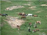 ZelenicaNa Zelenici se pase kar številna čreda goveje živine, vmes so tudi konji.