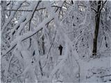 VremščicaZima, zima bela (2)