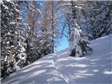 Goli vrh  1787 mnmIz gozda na sonce