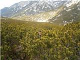 Veliki vrh, DleskovecKu - Ku