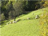 Polhograjska Grmada in Toščin še ovčke na paši