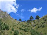 Monte Pisimonimed življenjem in smrtjo, nekatere drevesa je uničil požar, nekatera rastejo naprej