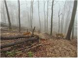 Polhograjska Grmada in ToščSpust po strmi in še vedno ranjeni poti iz Toškeg Čela