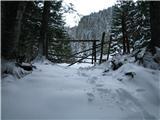 Slovenske planine v vseh letnih časihLesa na začetku Kofc.