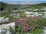 Srednji Velebitširni pogledi