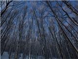 Vremščicazdele so se kot breze, a so bile le pobeljene od snega od vrha do tal