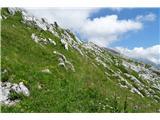Žrd (2324m)bujna vegetacija