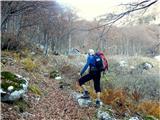 Briceljkpred lovsko kočo nad planino Bala do kamor nas v dobri uri pripelje zložna markirana pot