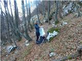 Briceljkpo položni prečnici čez gozd v smeri nazaj nad planino Balo in pod Stadorjem je zdaj obilo listja