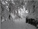 Polhograjska Grmada in ToščPonovno zimska idila,ki me spremlja celotno pot