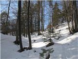 Polhograjska Grmada in ToščVišje je na planotah do 30cm zmrznjenega snega,ki nosi človeka