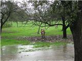 Vreme, vremenska napoved, nevarnost...Krave iz obupa jedo kar jabolka,vendar prekisla ali pretrda.