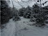 Pasja ravan 1019mDanes snežna idila, tudi ponoči ga je polahko nalagalo