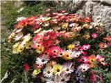 Monte Pelmo (3168)kakšno krasno jesensko cvetje, ki bo kmalu umrlo, kot umre vse dobro