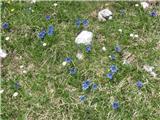 Planina Za Skalo in KaluderTravniška dolina, bogata z najrazličnejšim in bujnim cvetjem