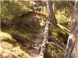 Dobrač Pot po gozdu