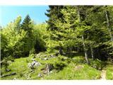 Vodiška planinaskozi zeleni gozd