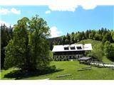 Vodiška planinaPartizanski dom na Vodicah in mogočna lipa