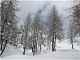 Čisti vrhše čisto zimski utrinek
