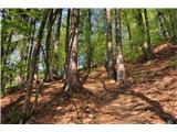 Polhograjska GrmadaTudi višje v gozdu strmina ne popusti