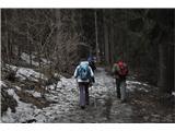 Uršlja Gora (Plešivec) 1699mZačetek poti v gozdu