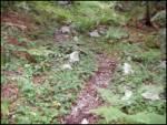 Kozji hrbet - planina_za_savnikom