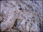 Pišnica - stenar
