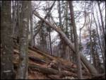 Mojstrana - Jerebikovec