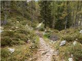 Konec ceste na Vogar - slatna
