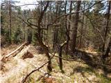 topole - Koseški hrib
